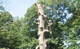 Dead Cedar Dismantling & Felling