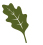 oak Leaf single