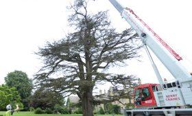 Sarsden House Cedar Dismantling  & Removal